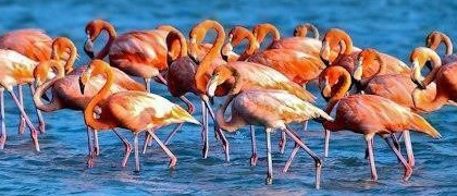 Flamingo's spotten